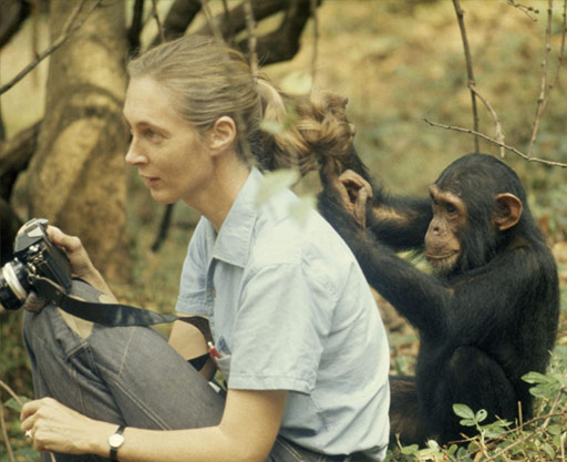 Jane Goodall con una cría de chimpancé