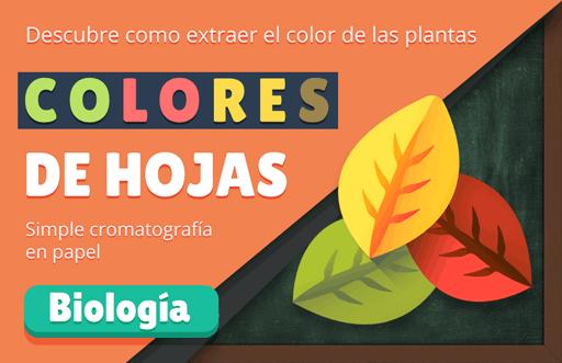 Colores de Hojas: extrayendo el pigmento de las plantas