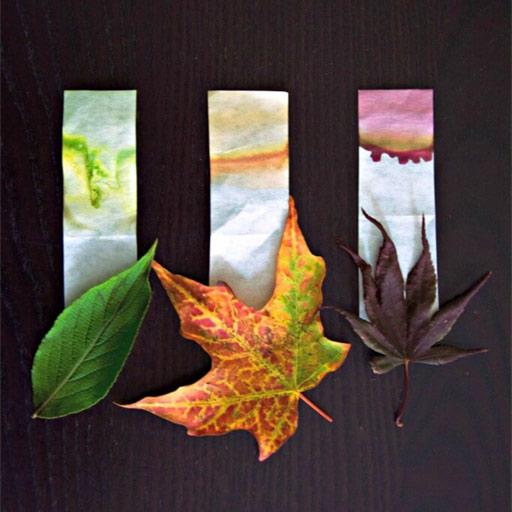 Cromatografía en papel de hojas