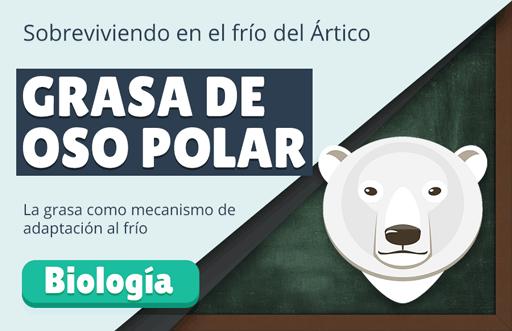 Grasa de Oso Polar: la piel de los animales árticos