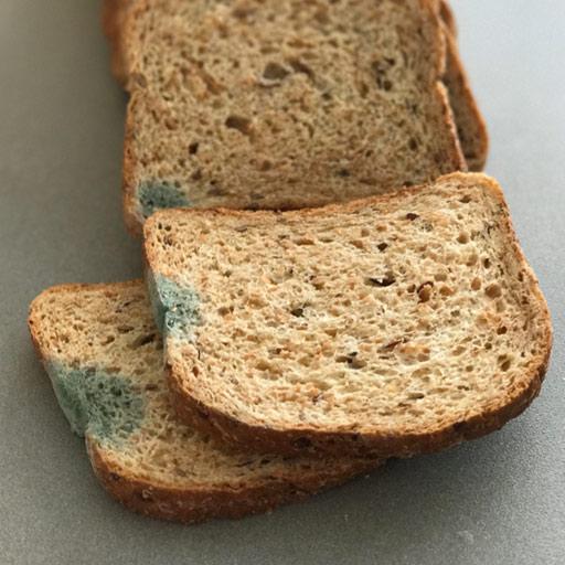 Pan de molde enmohecido