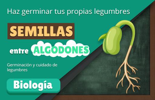 Semillas entre Algodones: experimento de germinación de legumbres