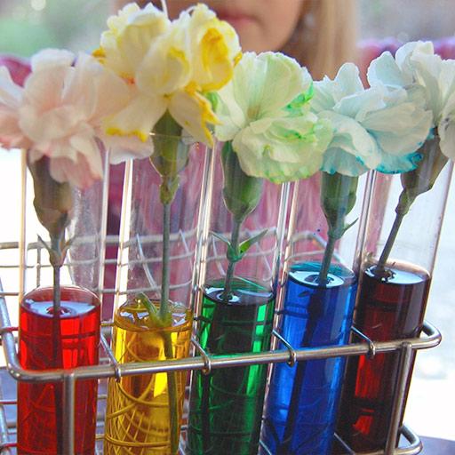 Teñir flores con colorante