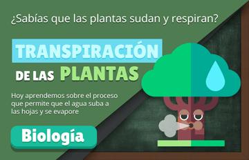 🌿 Transpiración de las Plantas